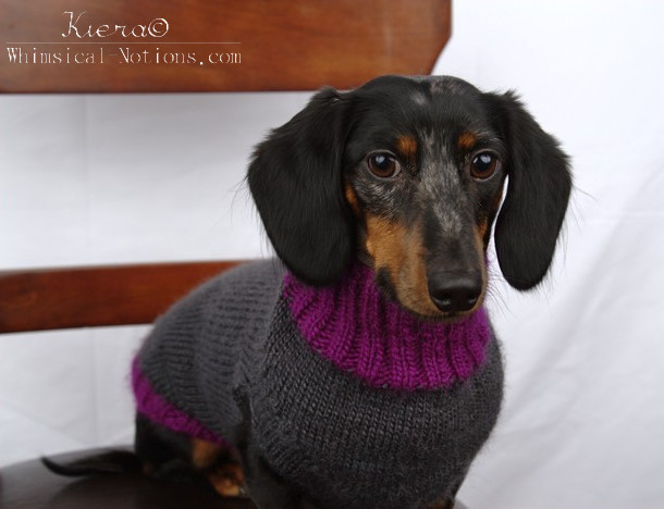 A Knit Sweater For Tuxley Whimsical Notions